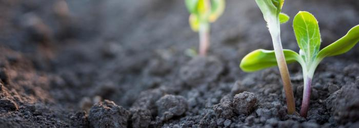 ph-in-soils-and-nutrient-solutions-for-plant-growth