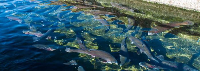 water-quality-monitoring-in-freshwater-fish-farming