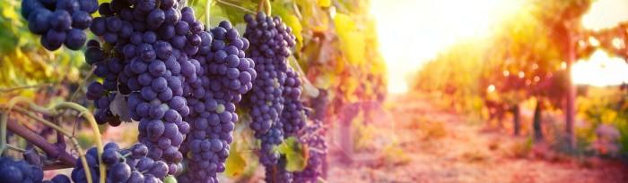 winebannerdos