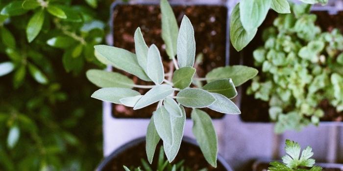 soil-ec-plants