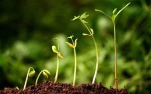 plants_growing_in_soil